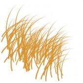 Inchiostro per stampa base olio Akua Speedball - inchiostri per intaglio, linoleum, acquaforte, xilografia